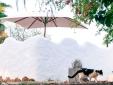 Casa da Alfarroba - Cochichos Farm Casas de Campo de alquiler integro - Olhao Faro Algarve
