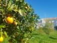 Exterior  - Casas tipicas - Cochichos Farm Olhao Faro Algarve Hotel apartamentos con cocina