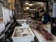 fresh fish at Cappuccio shop in the market