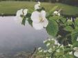 Desde el jardin