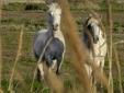 Paseos a caballo por la salvaje y secreta Camarga